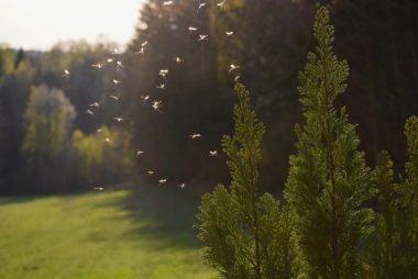 zwalczanie komarów na działce